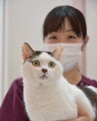 谷口史奈獣医師
